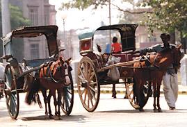 Horse-Carts